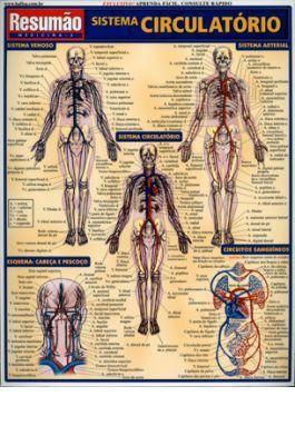 Resumo - Sistema Circulatório - Resumão